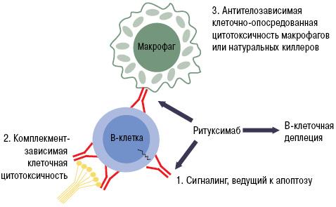 моноклональные антитела для лечения ревматоидного артрита