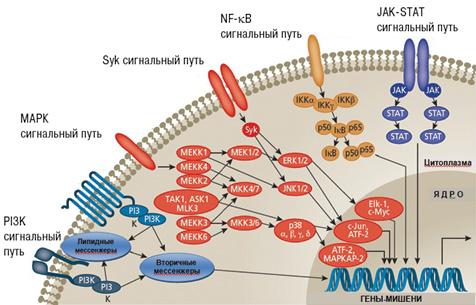 Схема внутриклеточных