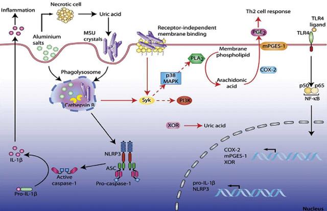 3856 Гиперурикемия— мультиморбидная патология вревматологии