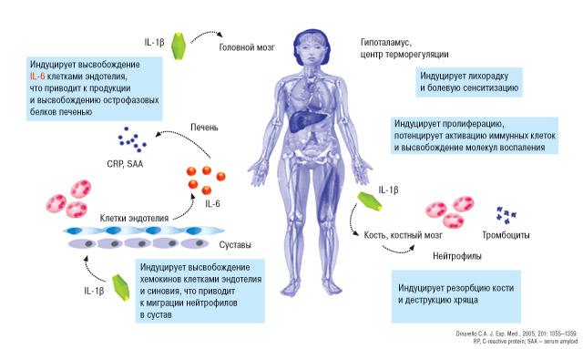 6789 Гиперурикемия— мультиморбидная патология вревматологии