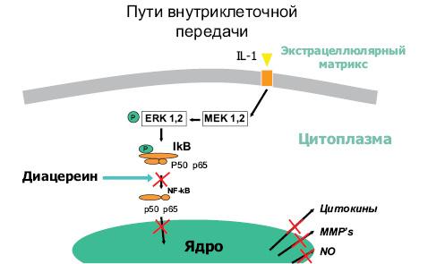 Выбор структурно модифицирующих ипротивовоспалительных препаратов упациентов состеоартрозом