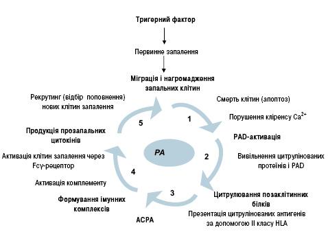 Діагностичне іпрогностичне значення антицитрулінованих антитіл уревматології