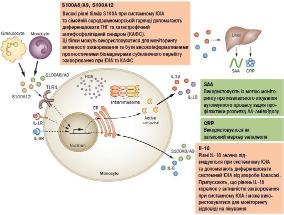 Кальпротектин крові (MRP 8/MRP 14)— чутливий біомаркер діагностики системного ювенільного ідіопатичного артриту