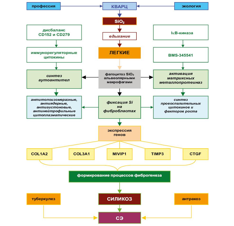 Синдром Эразмуса каккремний индуцированная форма системной склеродермии