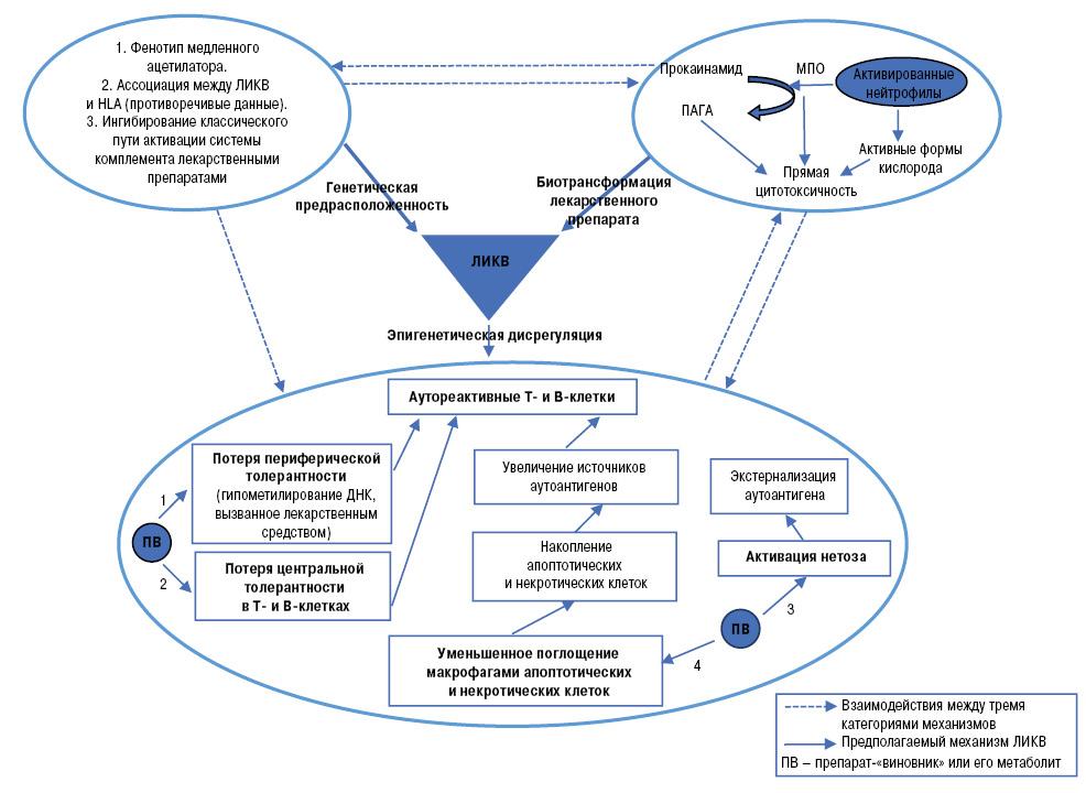 Лекарственно индуцированная красная волчанка: современные данные омеханизмах развития иассоциированных лекарственных препаратах